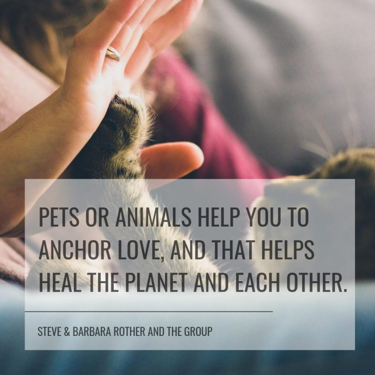 Pets quote